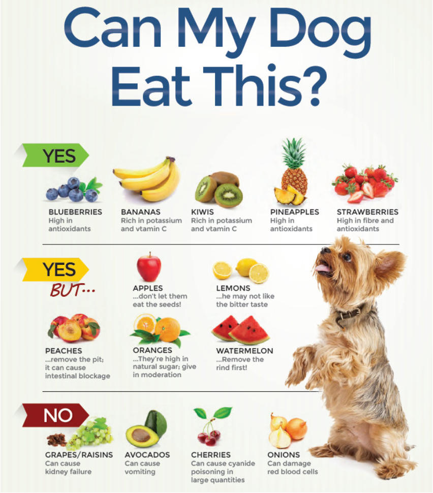 They Will Help You Find Recipes That Provide Balanced Nutrition For Your Dog S Specific Needs